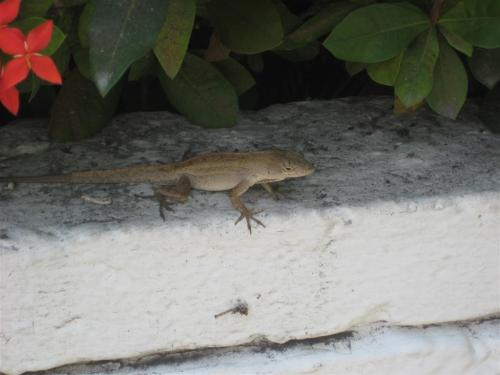 Evidence in favor of anole hypothesis